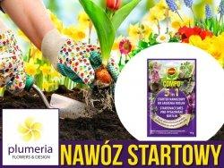 5w1 STARTER Nawozowy do sadzenia i przesadzania roślin 40 g