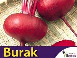 Burak ćwikłowy Egipski D'Egypte (Beta vulgaris var.conditiva) op. XXL 100 g