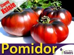 Pomidor CZARNY KSIĄŻE (Lycopersicon Esculentum) Sadzonka C2