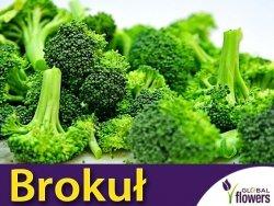Brokuł Cezar wczesny (Brassica oleracea convar.) 2g