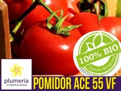 BIO Pomidor pod osłony ACE 55 VF nasiona ekologiczne 0,5g