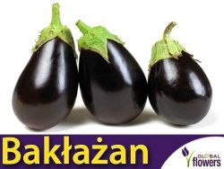 Oberżyna Bakłażan BLACK BEAUTY (Solanum melongena) nasiona 1g