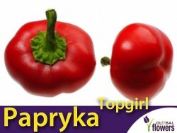 Papryka Słodka Topgirl (Capsicum annuum) 0,3g