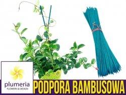 Podpora do roślin (tyczka bambusowa) Bambus łupany zielony 50cm/5mm. 10 szt.