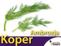 Koper ogrodowy Ambrozja (Anethum graveolens) nasiona 5g