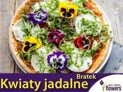 Kwiaty jadalne - Bratek wielkokwiatowy mieszanka nasion 0,5g