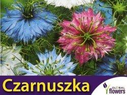 Czarnuszka Damasceńska - mieszanka (Nigella damascena fl.pl.)