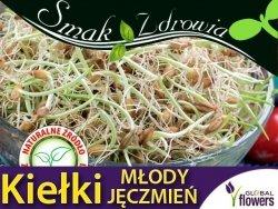 Nasiona na Kiełki - Młody jęczmień (Hordeum vulgare L.) 30g