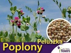 Poplony - Zielony Nawóz Ekologiczny - Peluszka - Groch Pastewny Siewny (1000 g)