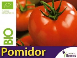 BIO Pomidor Ace 55 VF pod osłony 0,5g