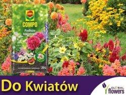 Podłoże kwiatowe COMPO 20 L