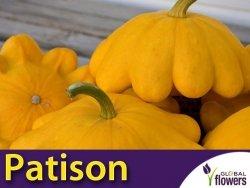 Dynia Patison Orange (Cucurbita pepo) 1g