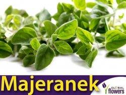 Majeranek (Origanum majorana) Sadzonka P9