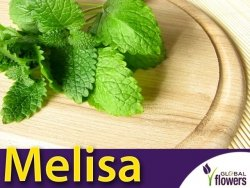 Melisa lekarska - (Melissa offcinalis) nasiona 0,3g