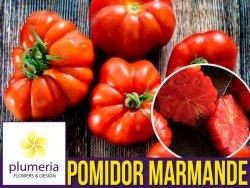 Pomidor MARMANDE (Lycopersicon Esculentum) nasiona 1g
