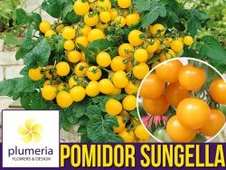 Pomidor SUNGELLA Cherry Yellow (Lycopersicon Esculentum) nasiona 0,5g