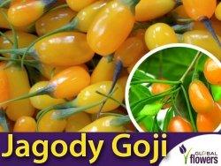 Jagody Goji 'Amber Sweet Goji ®' (Lycium barbarum) Sadzonka 60-90cm