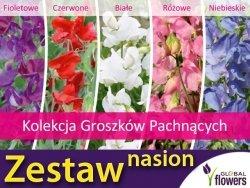 Kolekcja Groszków Pachnących (zestaw 5 odmian) nasiona