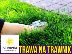 Mieszanka trawnikowa UNIWERSALNA - trawa do wysiewu. 0,5kg
