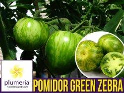 Pomidor zielony w paski GREEN ZEBRA (Lycopersicon Esculentum) nasiona 0,2g