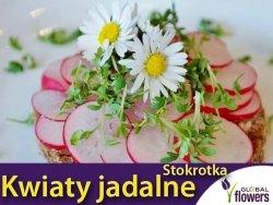 Kwiaty jadalne - Stokrotka pospolita łąkowa biała nasiona 0,2g