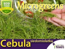 Microgreens - Cebula siedmiolatka 4g