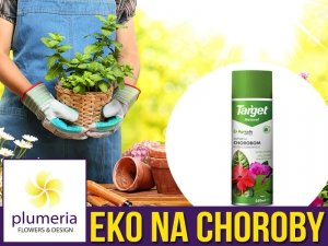 Agricolle Naturalny środek na choroby grzybowe (Aerozol) 250ml