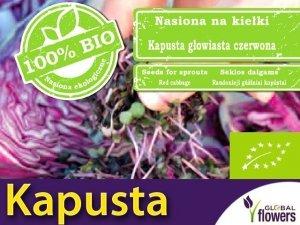 BIO Czerwona Kapusta - nasiona na kiełki ekologiczne 10g