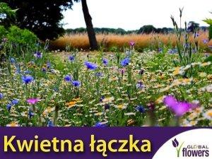 Kwietna łączka - mieszanka kwiatów polnych nasiona 100g