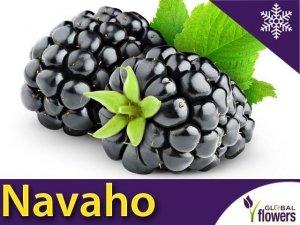 Jeżyna bezkolcowa 'Navaho' (Rubus fruticosa) Sadzonka