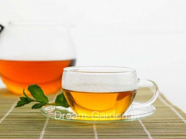 Mięta jako herbatka