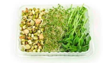 Kiełki fasoli Mung, Adzuki oraz soczewicy zielonej