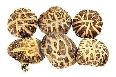 Shitake grzybnia