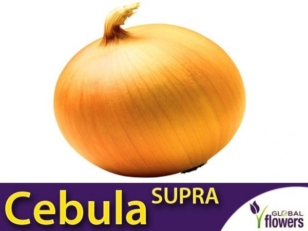 Cebula Supra (Allium cempa) 5g
