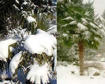Nie straszne jej śniegi