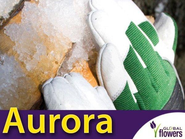 Rękawice Ogrodnicze - Aurora - Bardzo ciepłe z długim mankietem.