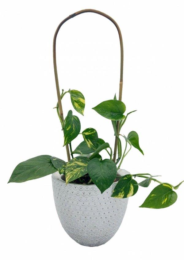 Podpory do roślin pnących