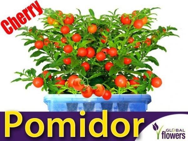 Pomidor Cherry Maskotka Koktajlowy (Lycopersicon Esculentum) 0,5g