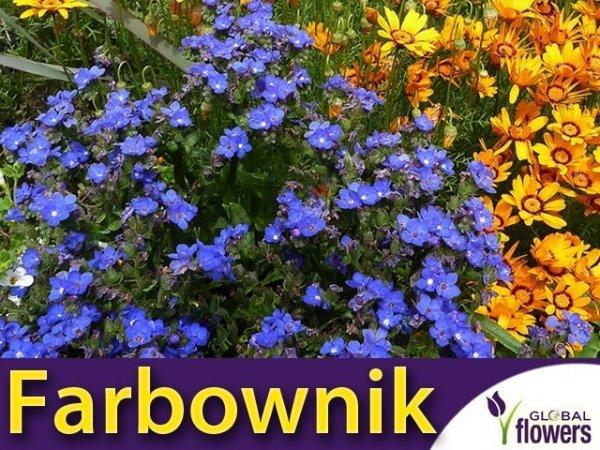 Farbownik, mieszanka (Anchus capensis) 0,5g