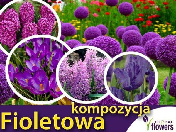 """Kolorowy ogród """"Harmonia barw"""" Kompozycja fioletowa CEBULKI"""