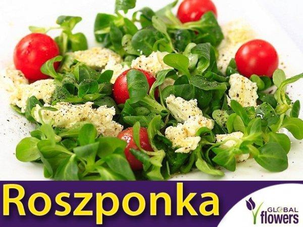 Roszponka Verte de cambrat (Valerianella locusta)
