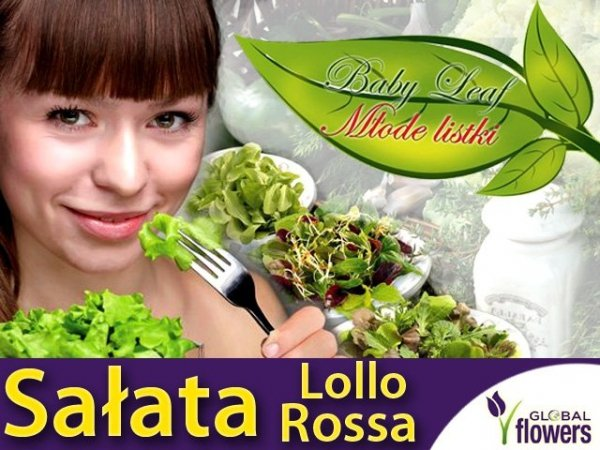 Baby Leaf (Lactuca sativa) Sałata liściowa Lollo Rossa