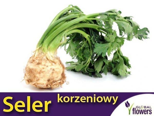 Seler korzeniowy Zagłoba (Apium graveolens) 1 g