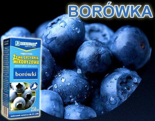 Mikoryza Grzybnia do Borówek i Żurawin op. XL 2 litry