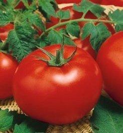 Pięknie wybarwiony Pomidor gruntowy Promyk