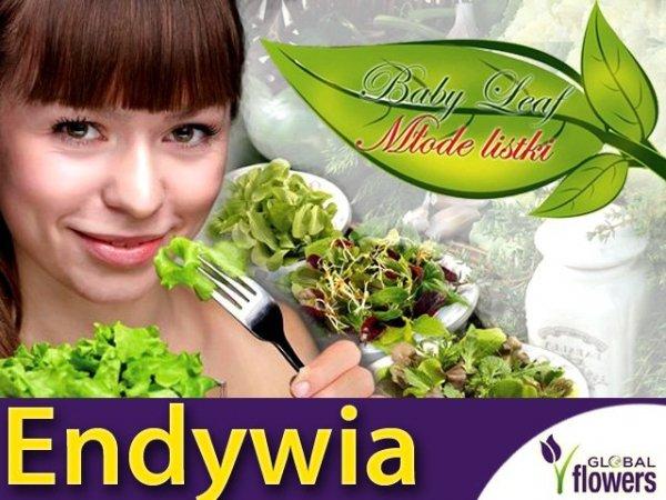 Baby Leaf Endywia MIX (Cichorium endivia)