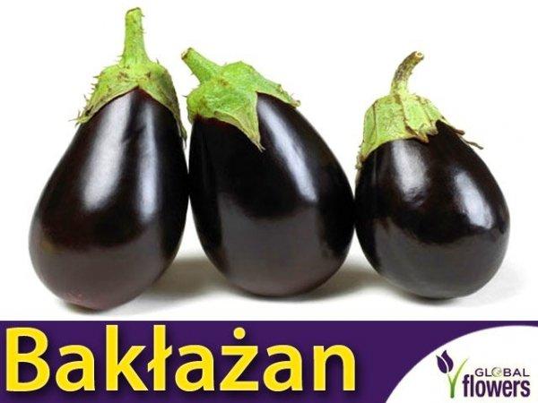Oberżyna Bakłażan Black Beauty (Solanum melongena)