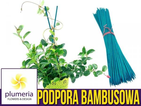 tyczka bambusowa podpory do kwiatów cena
