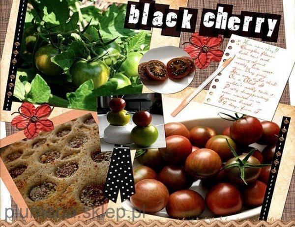 Pomidor Czarny Black Cherry