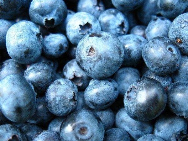 owoce borówki idelane do ciast i na przetwory
